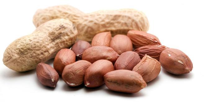 bij-kacang-tanah